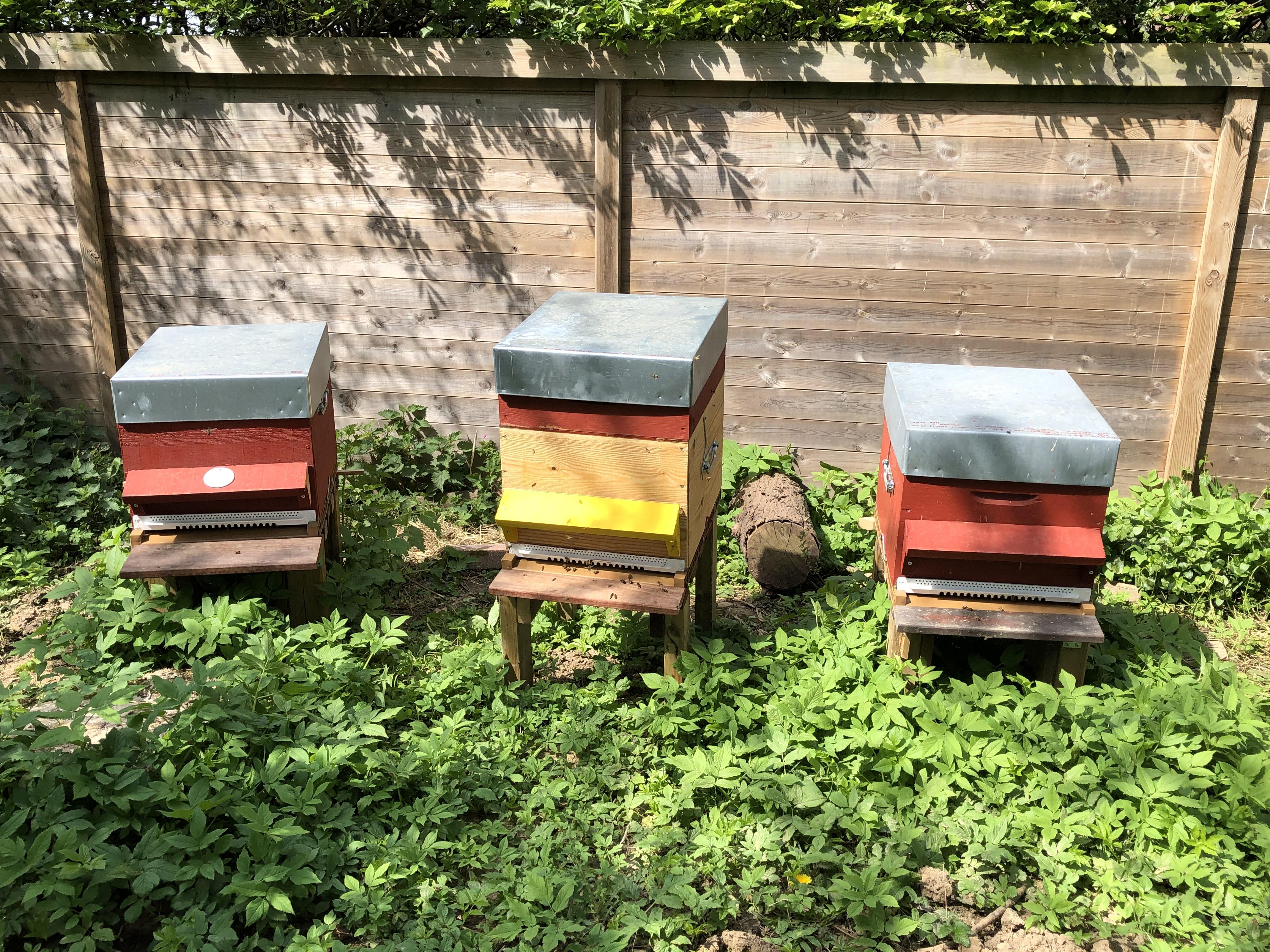 ruches en bois